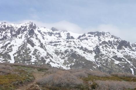 Bicarellu
